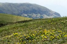 芽吹きを迎える草原大地
