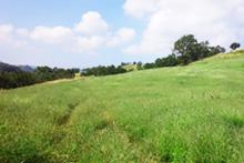 西部の草原及び森林景観(南小国町)