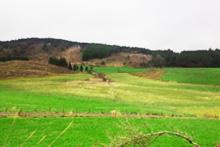 湧蓋山麓の草原景観(小国町)